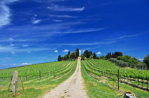 News Assipi: Locazione affitto di terreni aree non edificabili fondi rustici: iva, registro (10/09/18)